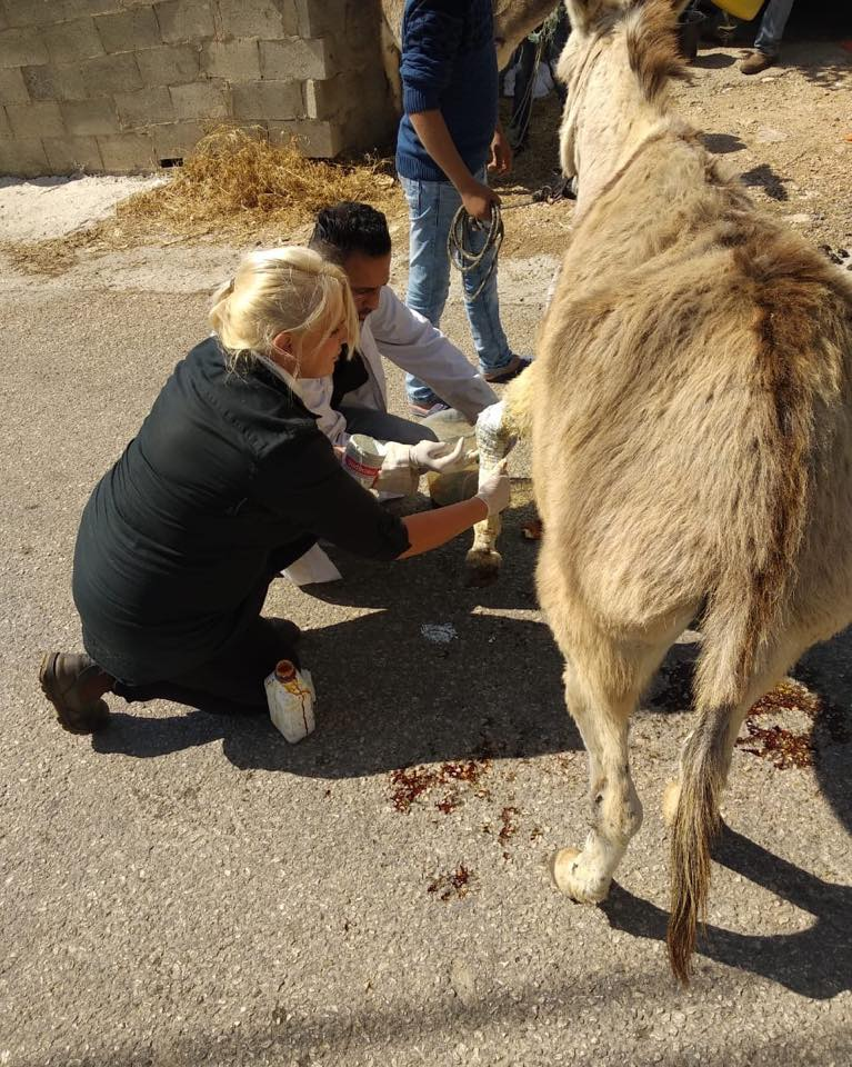 Doing all we can to try to heal this little donkey's legs