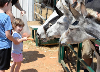 Visitor's Day at the Sanctuary in Israel