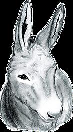 Donkey drawing by Lucy Fensom