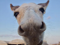 Help us donkeys in Israel!