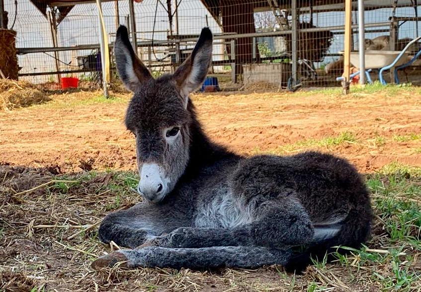 Newborn foal John