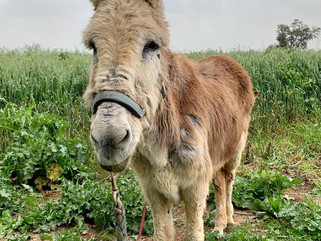 In loving memory of our little elderly Valerie donkey... 🙏🏼♥️