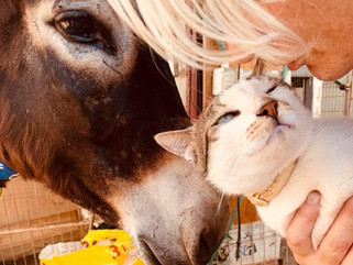 Latest news from the sanctuary