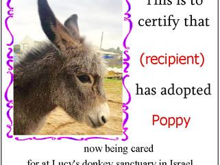 Adopt a Donkey for Donkey Day!