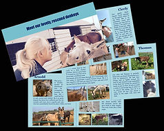 Collage-Biggi-Booklet-500H.jpg