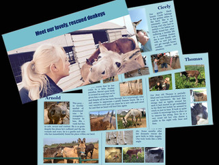 Our new 'Donkey Booklet' - presenting the sanctuary residents