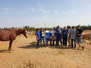 Israel's Freemasons volunteer at Lucy's Donkey Sanctuary