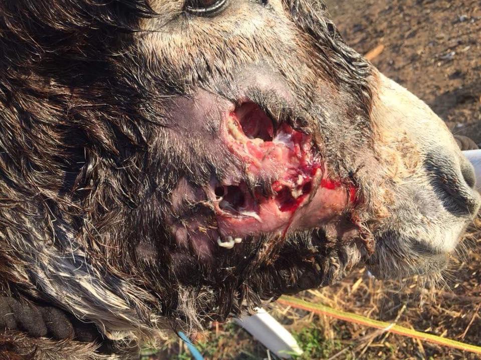 Elijah's face after the abscesses burst