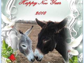 A Happy New Year to all our supporters!