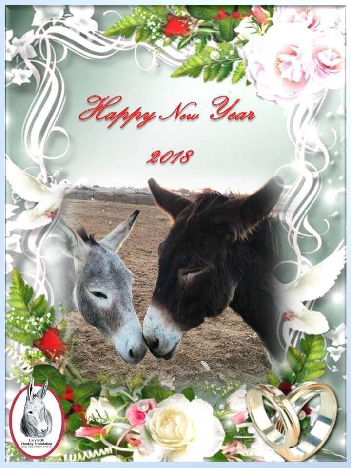 Happy New Year from Lucy's Donkeys