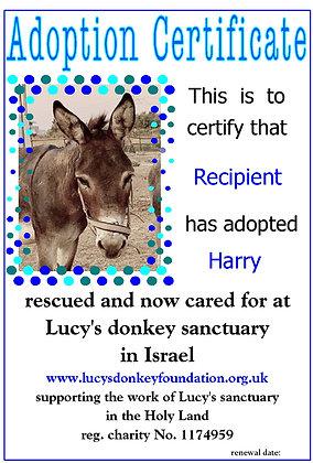 Donkey Adoptions