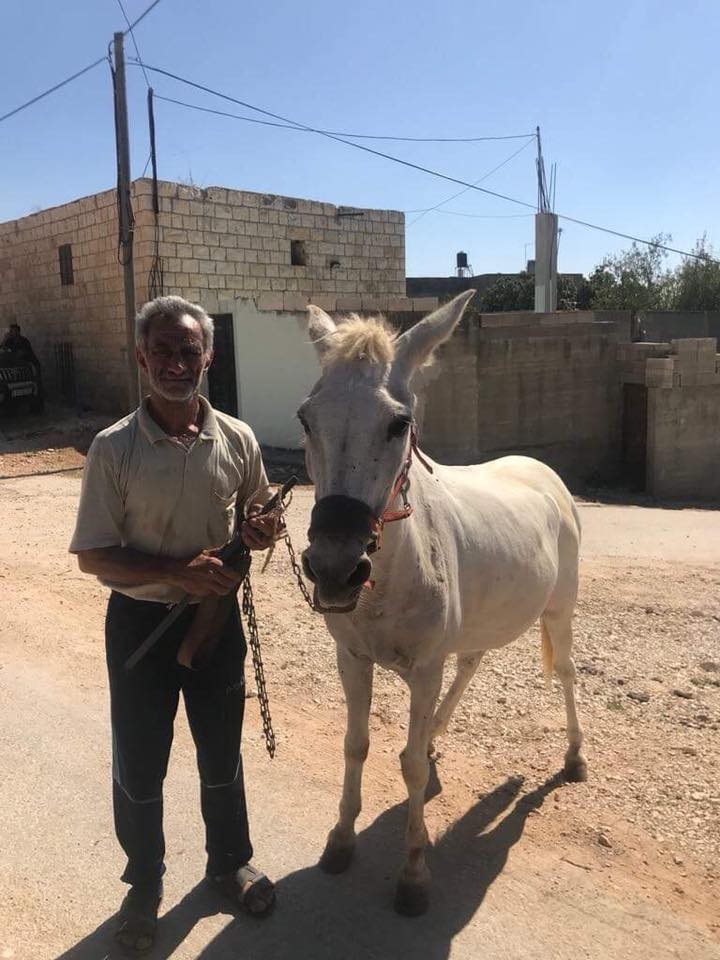 A wonderful, very, very old mule with a new halter Lucy gave him and his proud owner