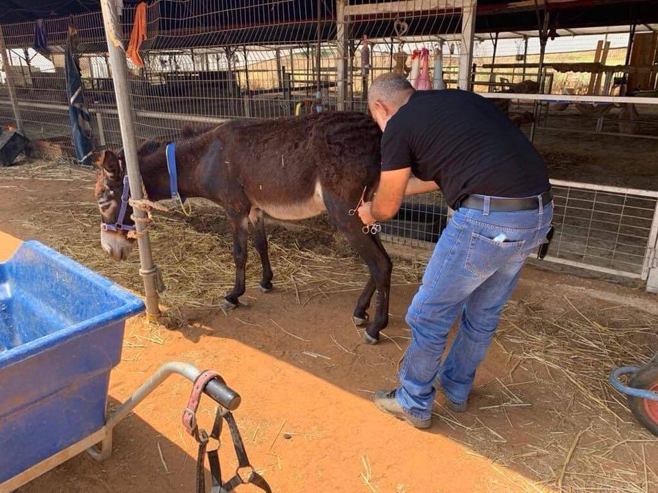 Alan with the vet, Dr. Jaber, during the procedure