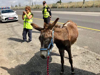 Lucy's latest rescue donkey: Esther