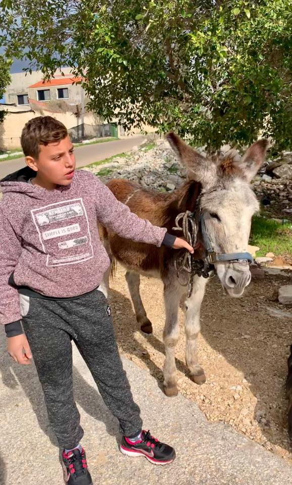 This little donkey is always very sweet natured and not badly cared for, like always though, it's the unnecessary aggressive, rough handling and shouting at the animals that is the worst of the problems