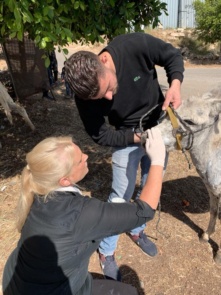 Helping the little Sam donkey with the help of our kind fellow volunteer, Ismaeel