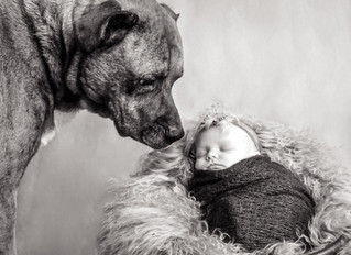 Baby K - Newborn session with canine friend