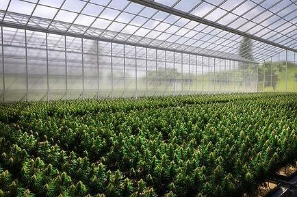High tech Greenhouse #5.jpg