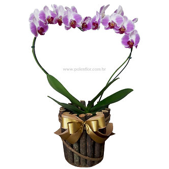 Orquídea Coração