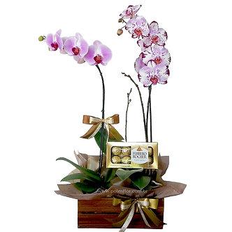Caixote de Orquídeas c/ chocolates