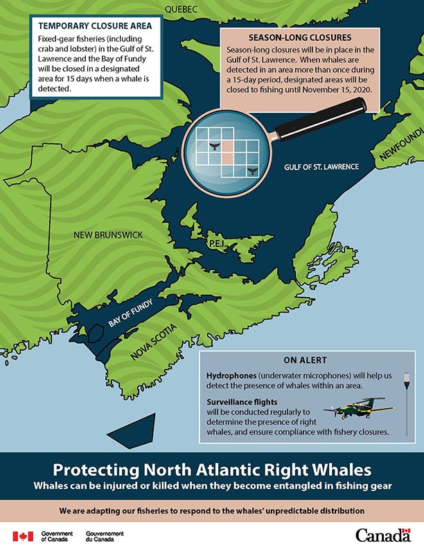 North Atlantic Right Whales Return To Canada