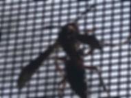Wasp Exterminator Knoxville, TN.jpg