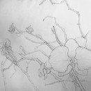 Brickman Student Sample - Beginning Drawing
