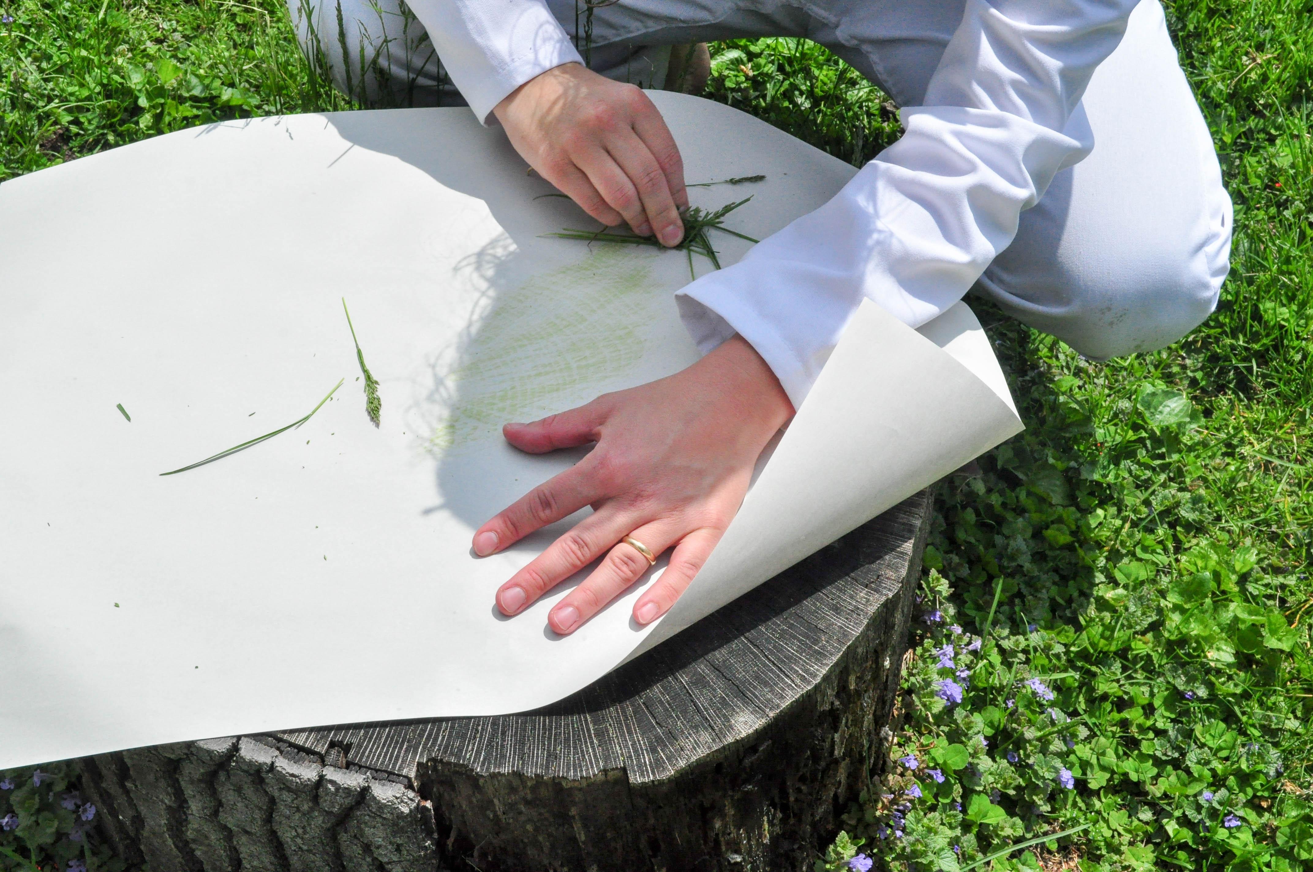Tree stump rubbings