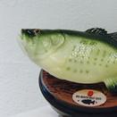Confession Fish