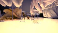 Seed Simulation Laboratory