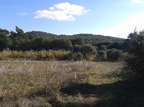 Grundstück 16.635 m2 mit schöne Blick in Llucmajor
