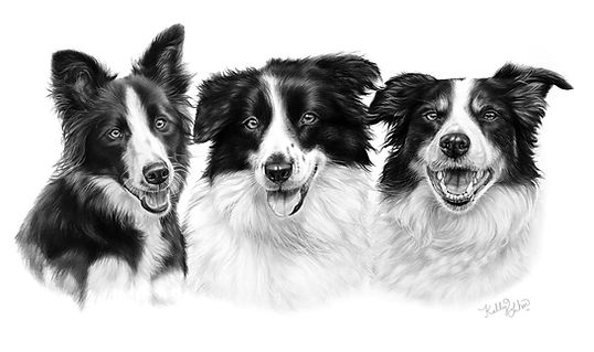 3 border collies.jpg