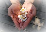 flower-22656_640_edited.jpg