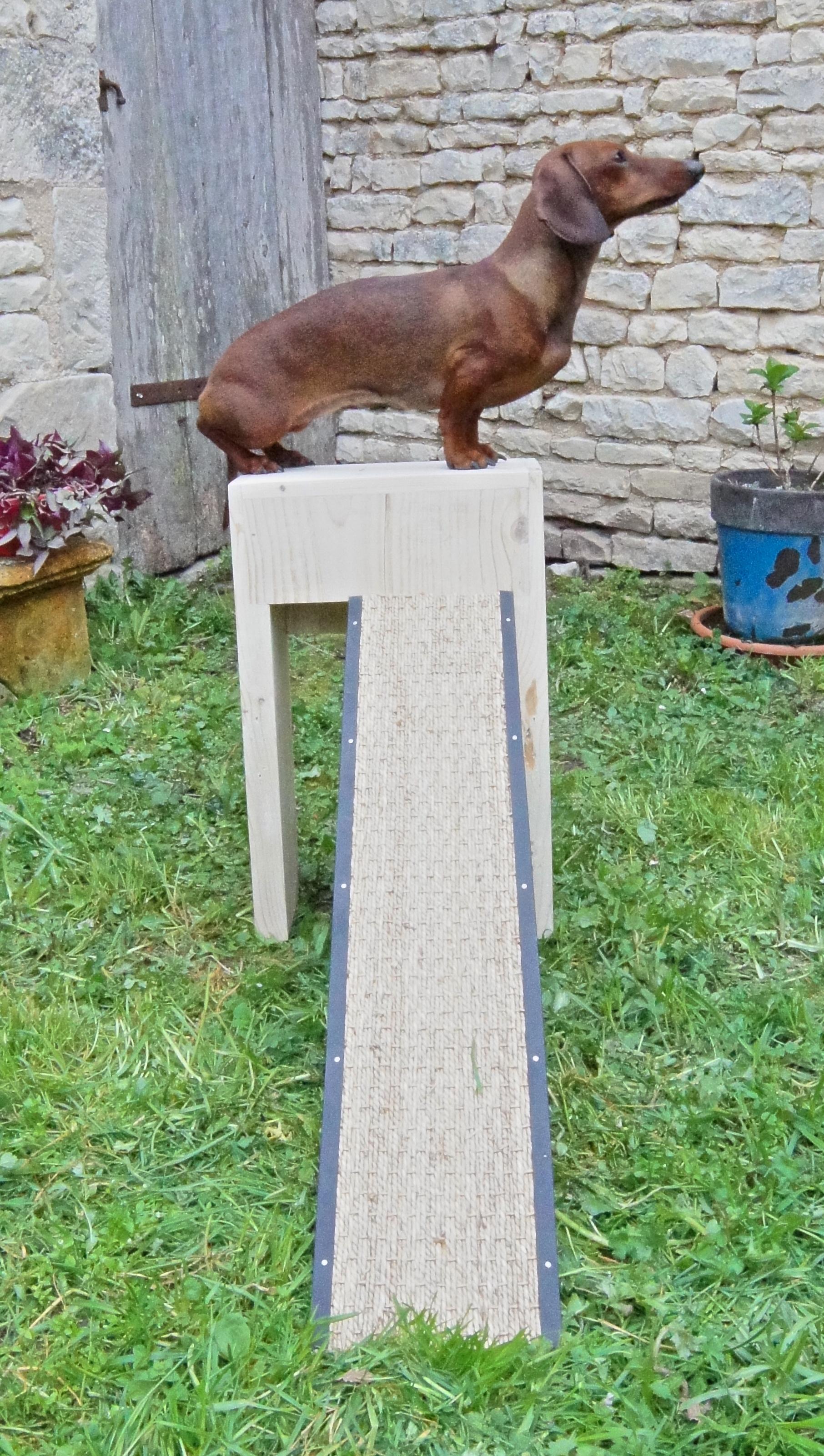 rampe accès petit chien