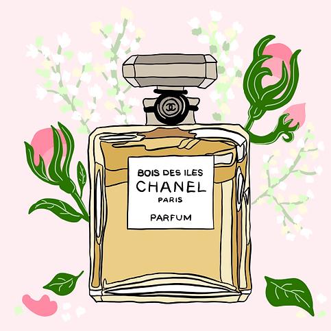 Branding - perfume bottle illustration