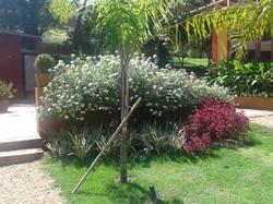 O contraste de flores com folhagens