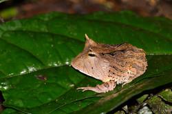 Ecuador Naturaleza (27 of 112)
