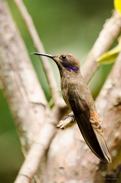 Ecuador Naturaleza (109 of 112)