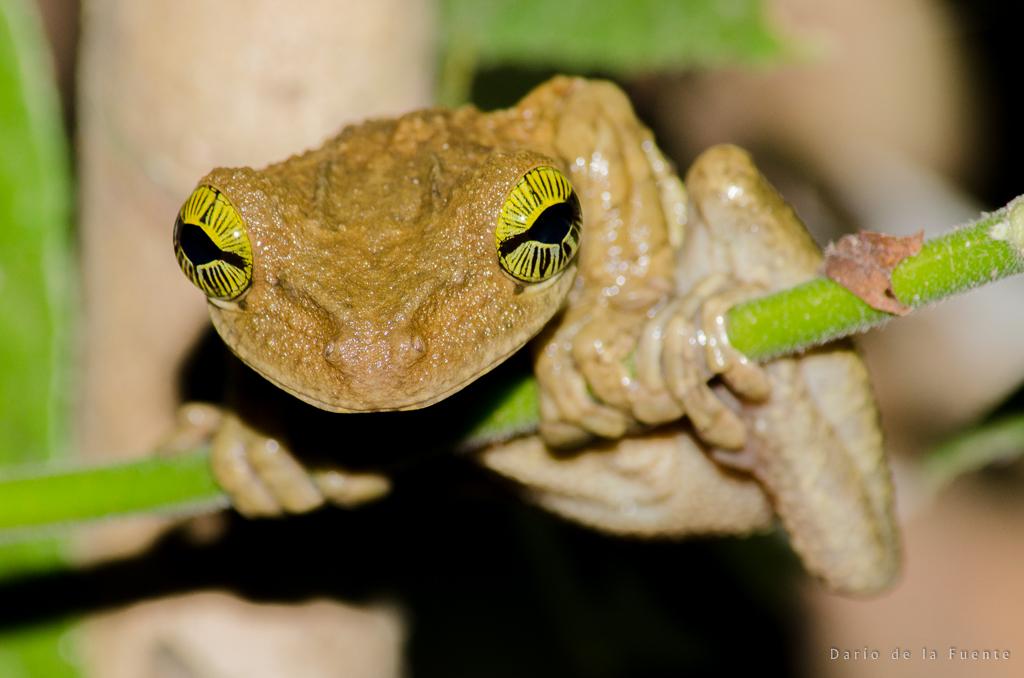 Ecuador Naturaleza (68 of 112)