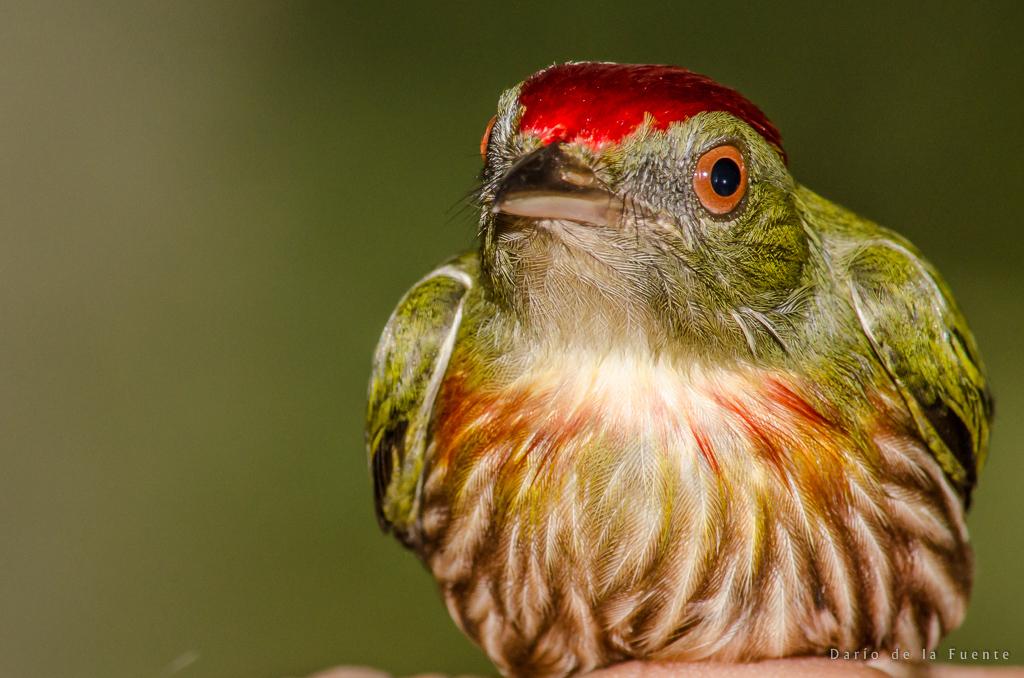 Ecuador Naturaleza (30 of 112)