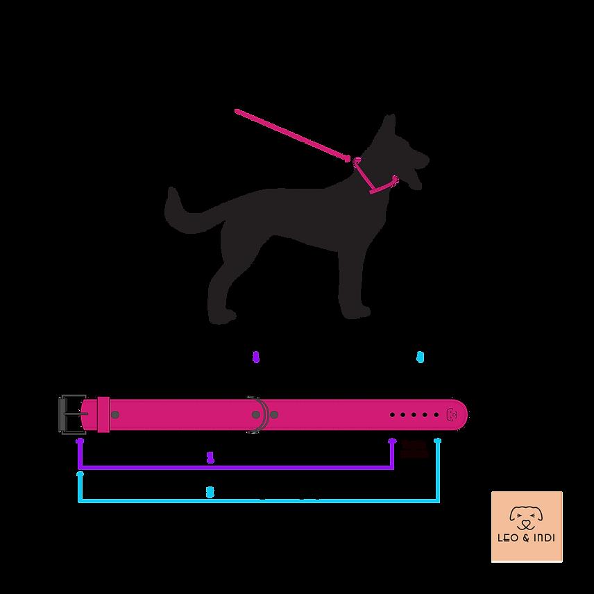 Sin fondo_Cómo saber la talla de mi perr