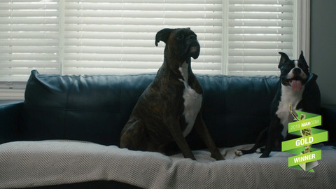 Economical Insurance - Pet Secure