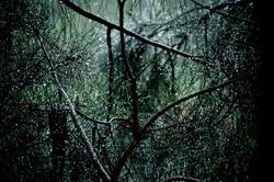Irma_Calabrese_after_rain