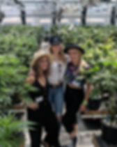 My_420_Tours_Cannabis_Greenhouse.jpg