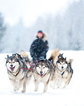 DogSledding_3.jpg