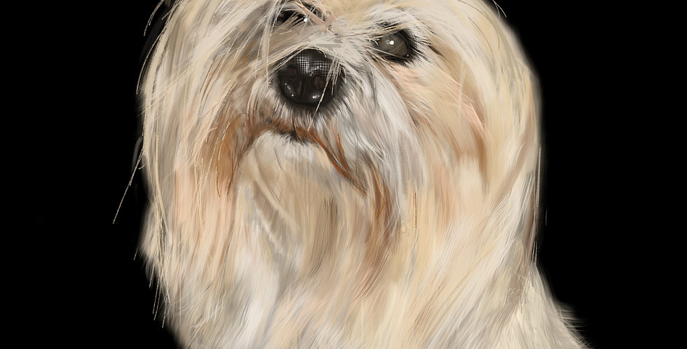 Your own personalised pet portrait hand drawn on the iPad