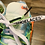 Thumbnail: NIKE OFF WHITE WAFFLE