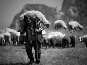 Reflecting on Psalm 23: Our Good Shepherd