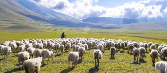 """Shepherding is a """"Two Way"""" Street"""