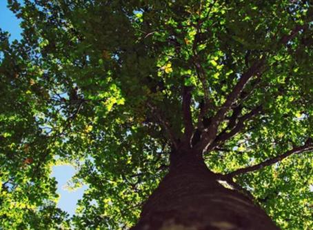 Radijski intervju o pomenu gibanja in stika z naravo